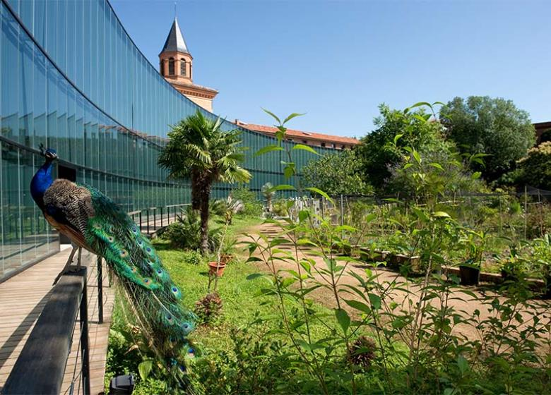 Visiter_Toulouse_Museum_7